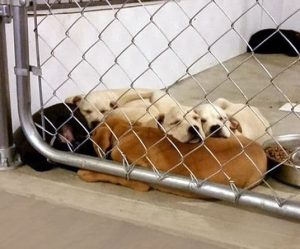 Overcrowded Animal Shelters Spread Disease