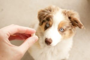 The Benefits of Vitamin C for Dogs with Distemper