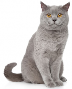 Kitty DT: A Natural Remedy for Feline Distemper