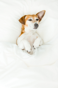 Does Your Dog Have Distemper? Here's How Chest Thumping Can Save Their Life!