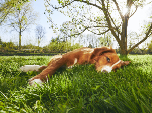 Vomiting and Diarrhea in Dogs: Is It Distemper? What Should I Do?