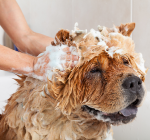 What Causes Skin Infections in Dogs with Distemper?